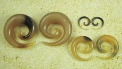 "Organic Golden Horn Spirals 12g-1"" (Pair) 2mm-25.5mm"